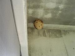 スズメバチの巣駆除前